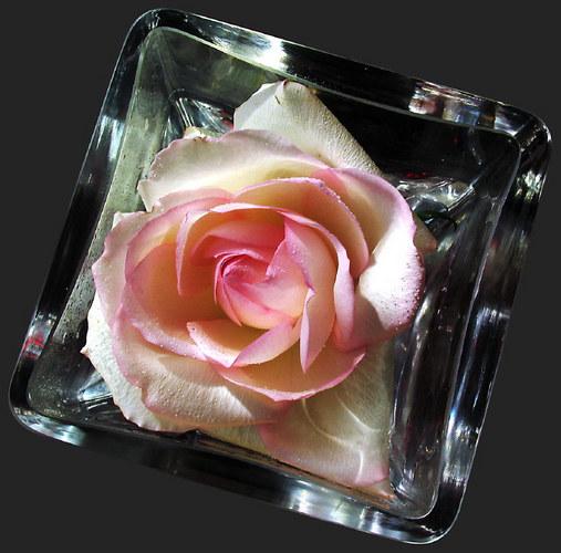 die rose im glas foto bild pflanzen pilze flechten bl ten kleinpflanzen rosen bilder. Black Bedroom Furniture Sets. Home Design Ideas