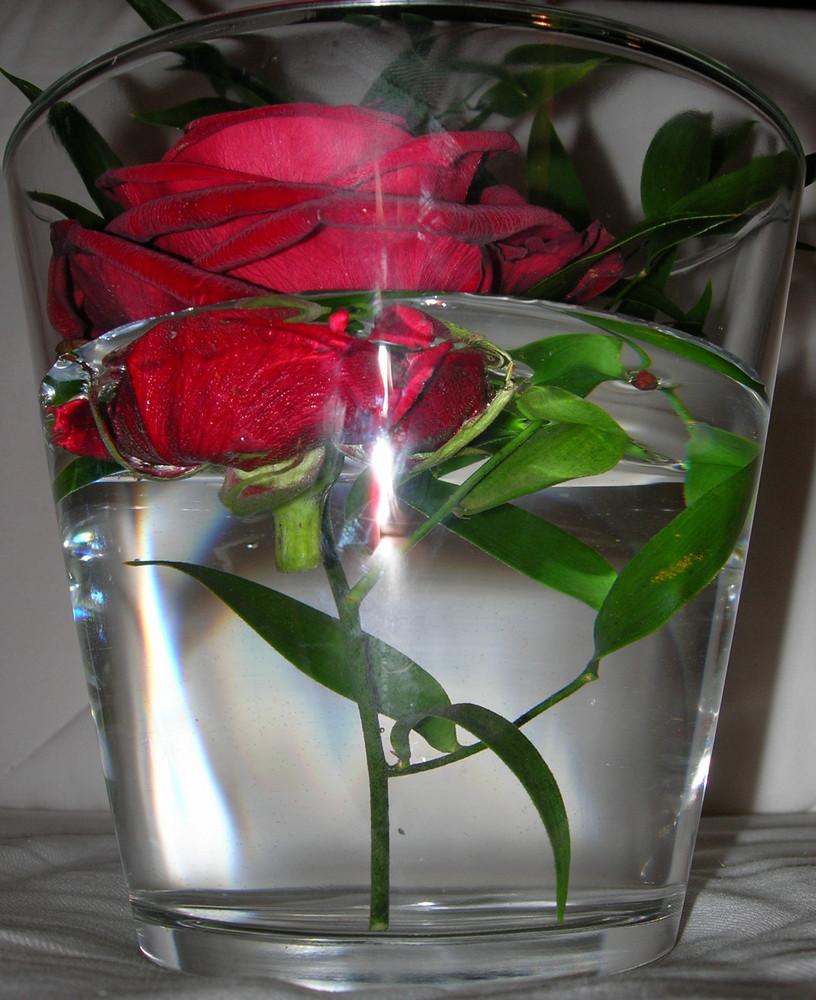 Die Rose im Wasser