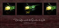 Die Rose spricht alle Sprachen der Welt