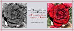 Die Rose stand im Tau...