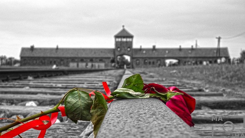 Die Rose von Birkenau