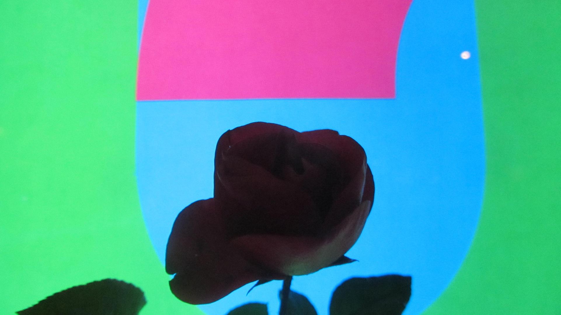 die Rose...die harben..und die formen