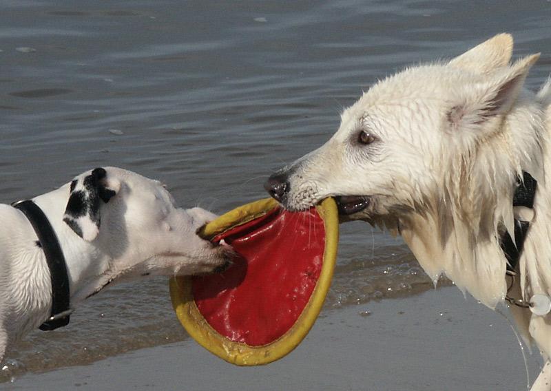 Die rote Frisbee-Scheibe haben wir natürlich auch ....