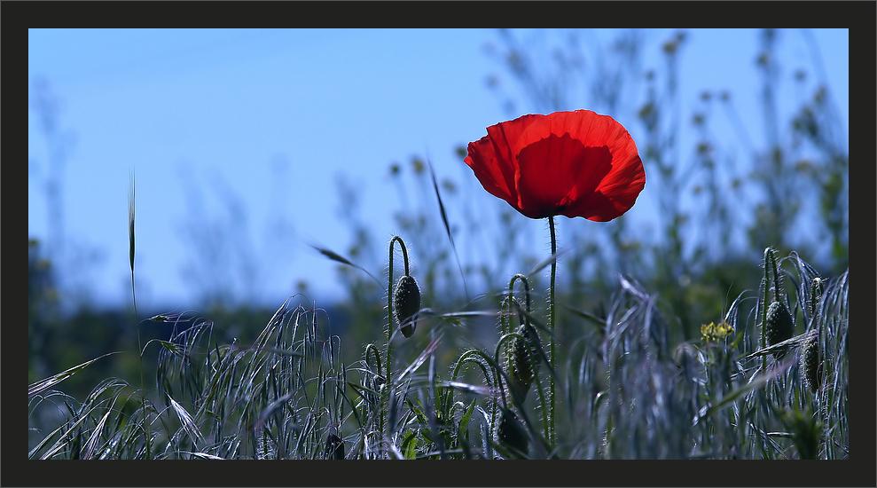 Die Rote Laterne ...