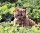 Die Rote - Nachbars Katze