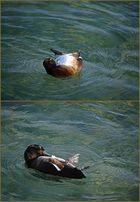die Rückenschwimmerin