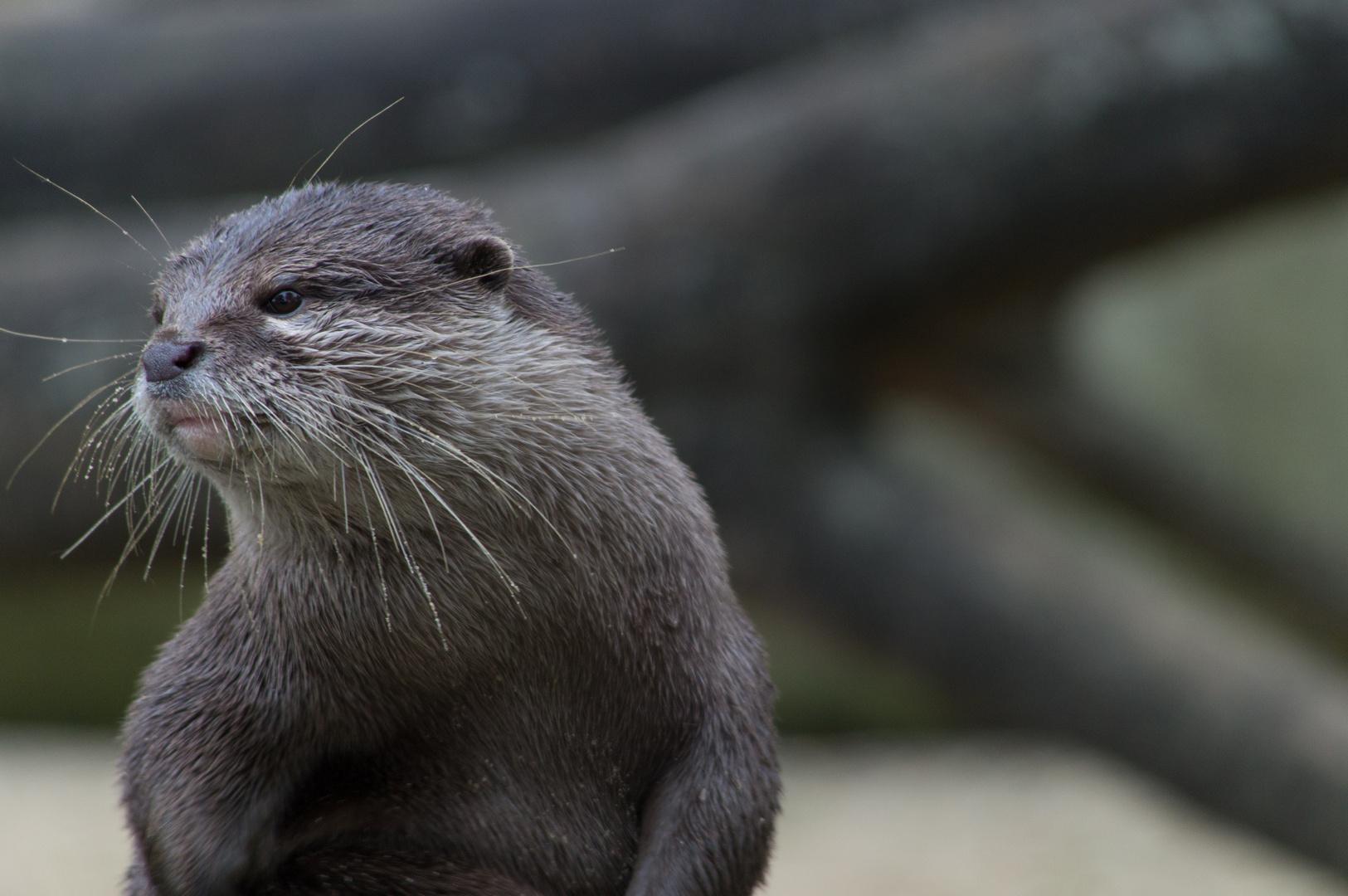 Die Ruhe des Berliner Otters