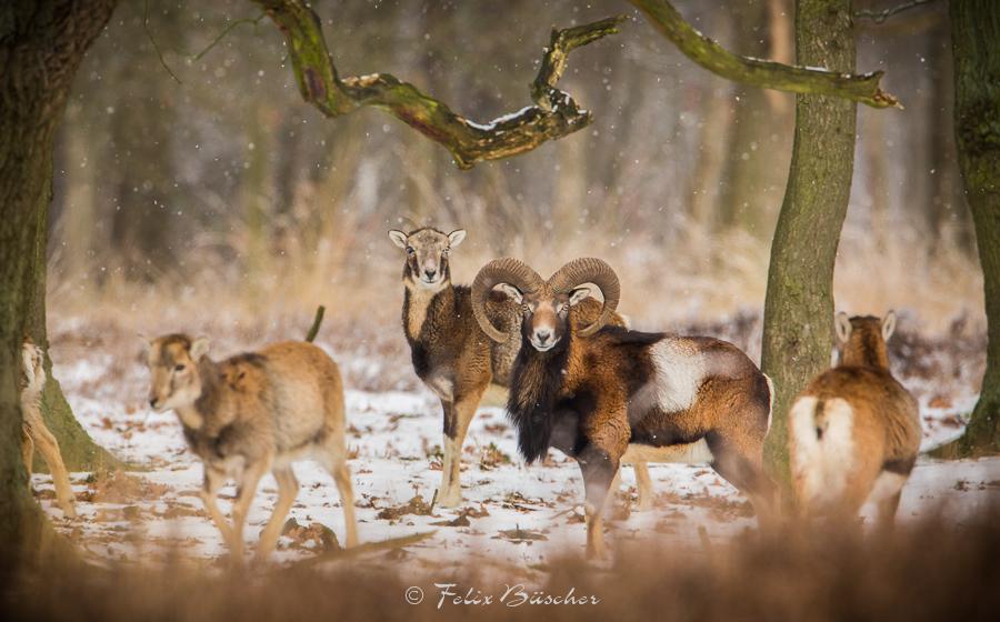 Die Ruhe im Winterwald genießen...