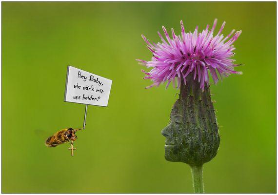 Die Sache mit den Bienchen und den Blümchen...