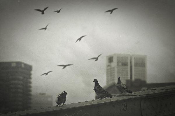 die Sache mit den Tauben...