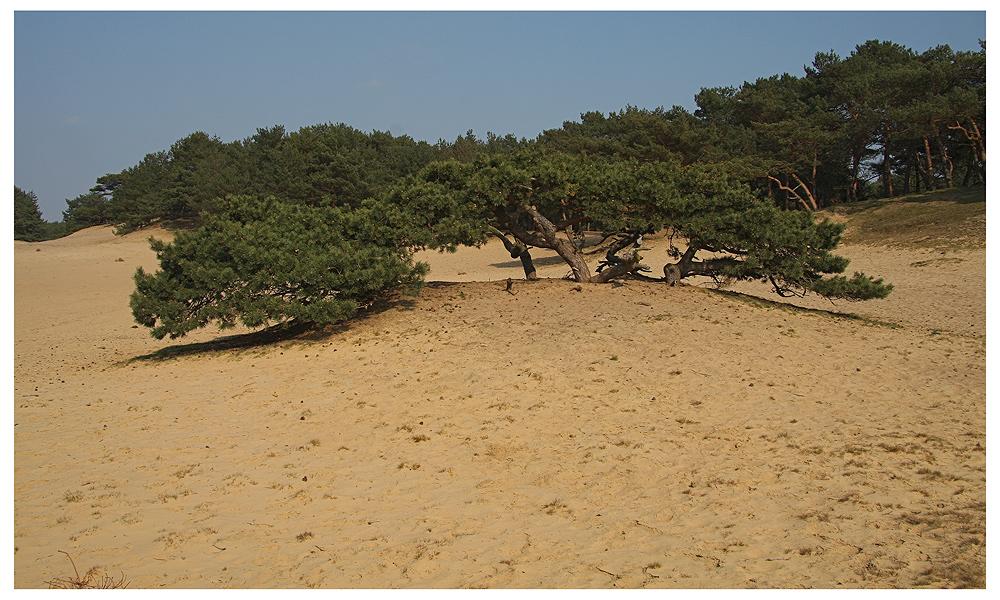 Die Sahara III...