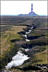 die Salzwiesen von Westerhever