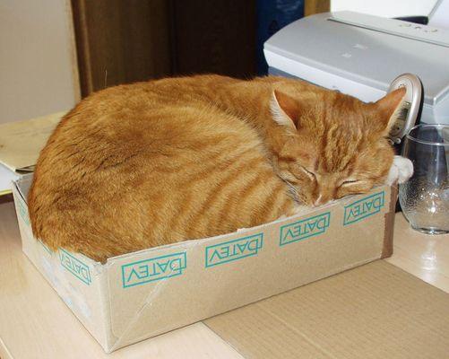 Die Schachtel ist meine Rettung!