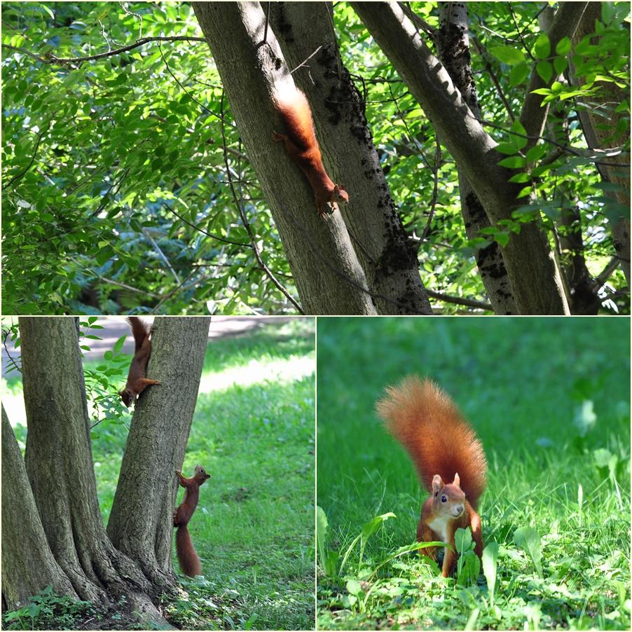 ..die Schlopa-Hörnchen..