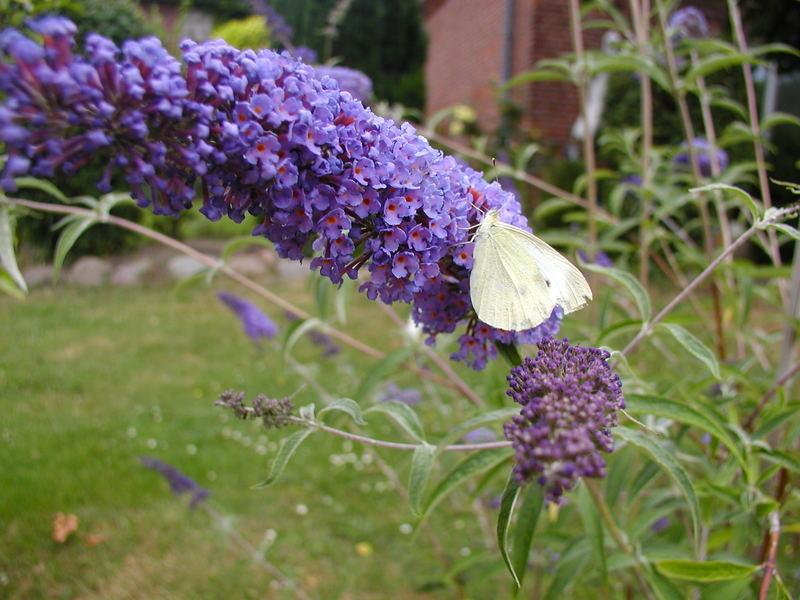 Die Schmetterlinge lachen wieder....