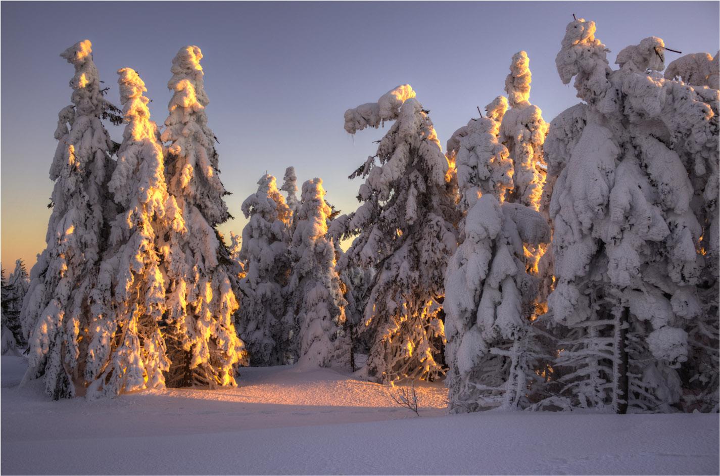 Die Schneebäume...