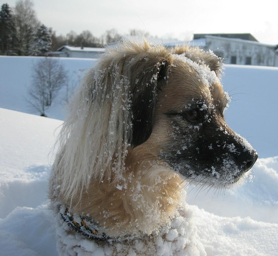 Die Schneekönigin :-)