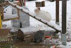 Die Schneeleiter