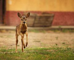 Die schnellste Maus von Mexiko...