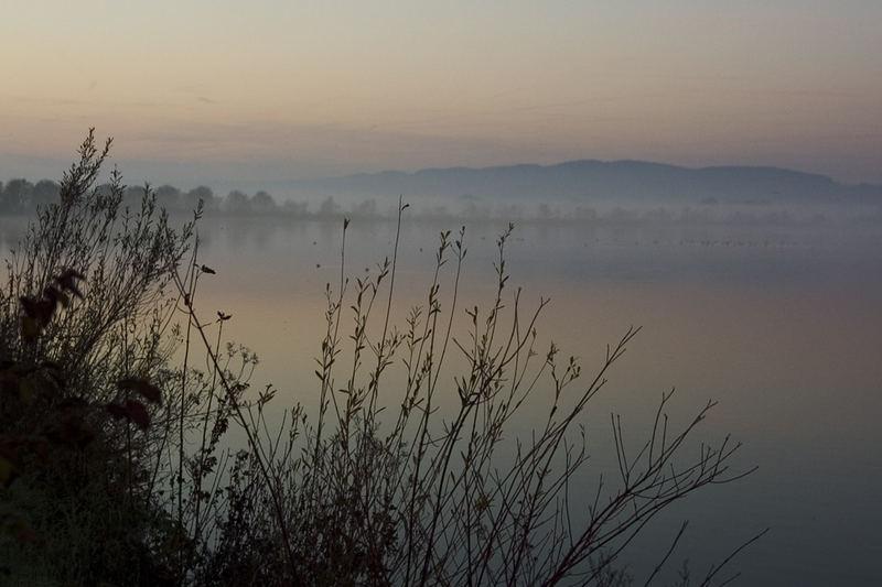 Die schöne Donau