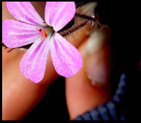 die schöne rosa blume :D....