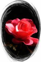 Die schöne Rose
