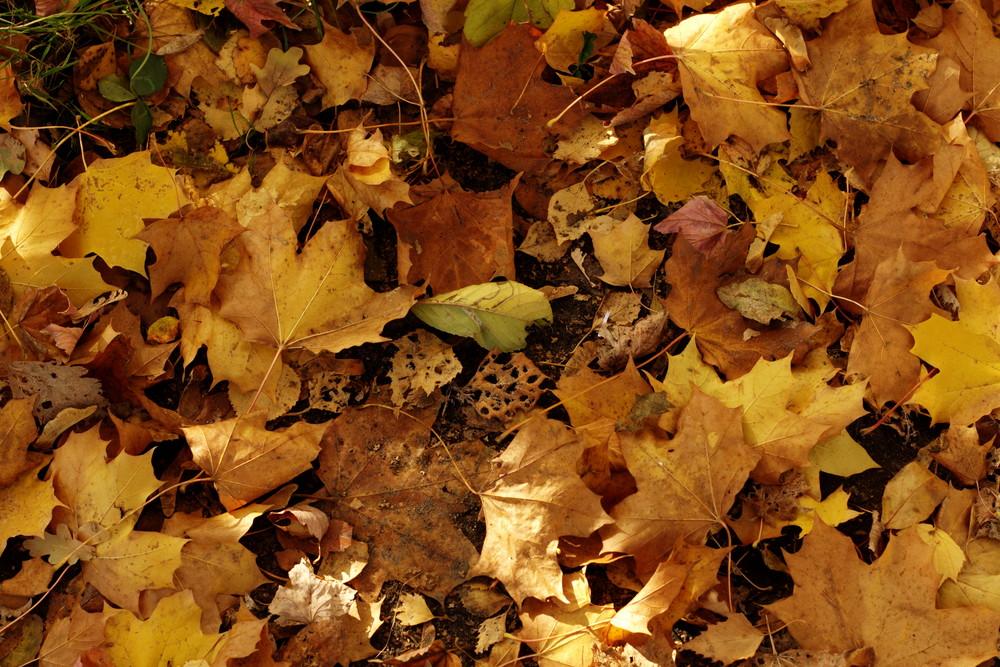 Die schöne Seite des Herbstes