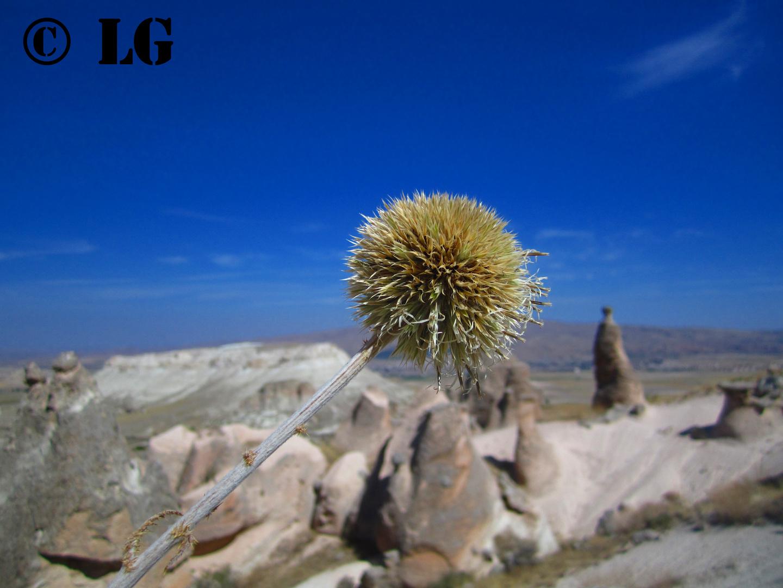 die Schöneit Capadokiens....
