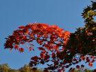 Die schönen Rottöne zum Herbstanfang