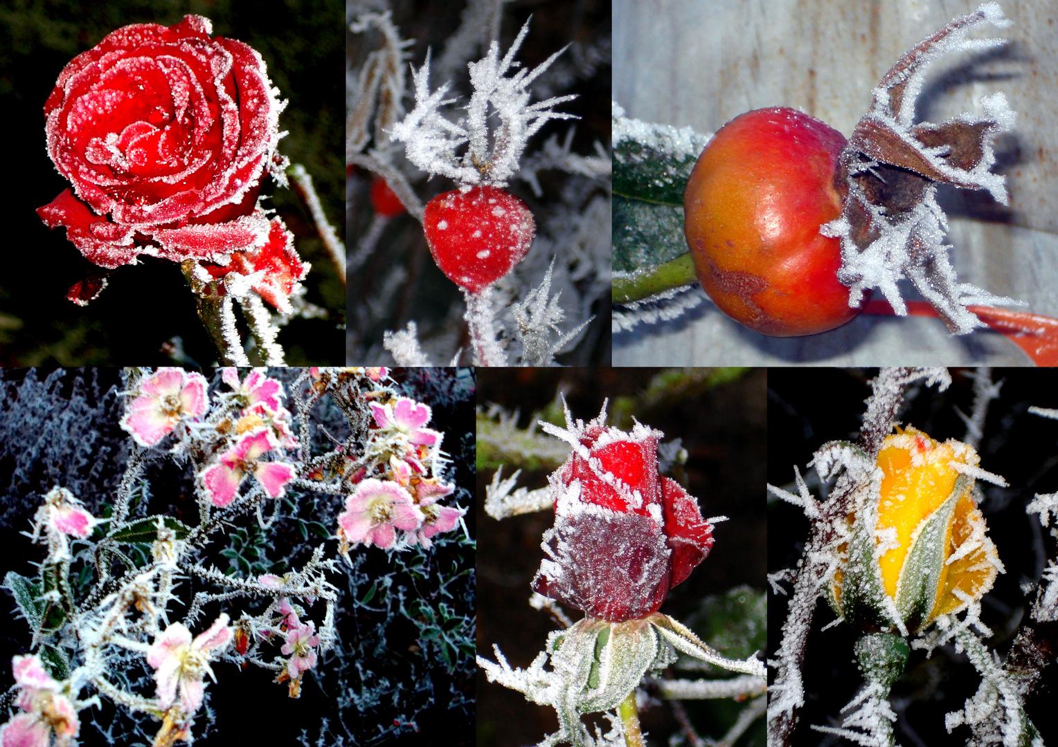 Die schönen Seiten des Frosts