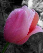 Die Schönheit des Frühlings