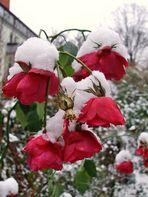 die Schönheit des Winters