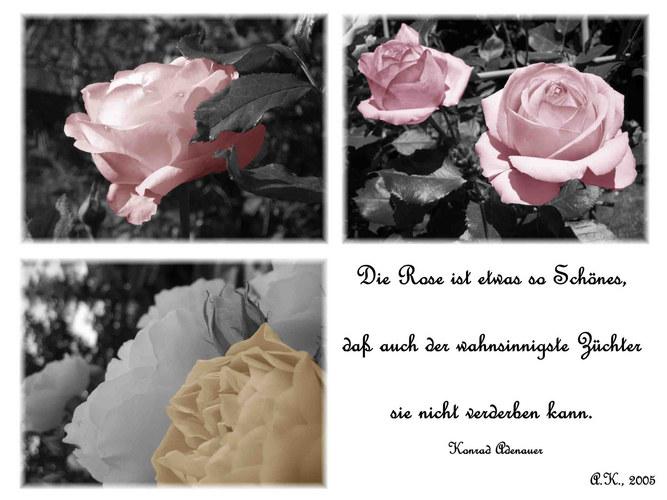 Die Schönste Blume Der Welt