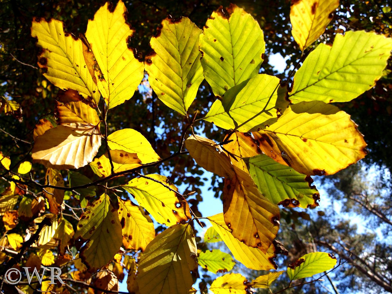 Die schönste farbenfrohe Jahreszeit