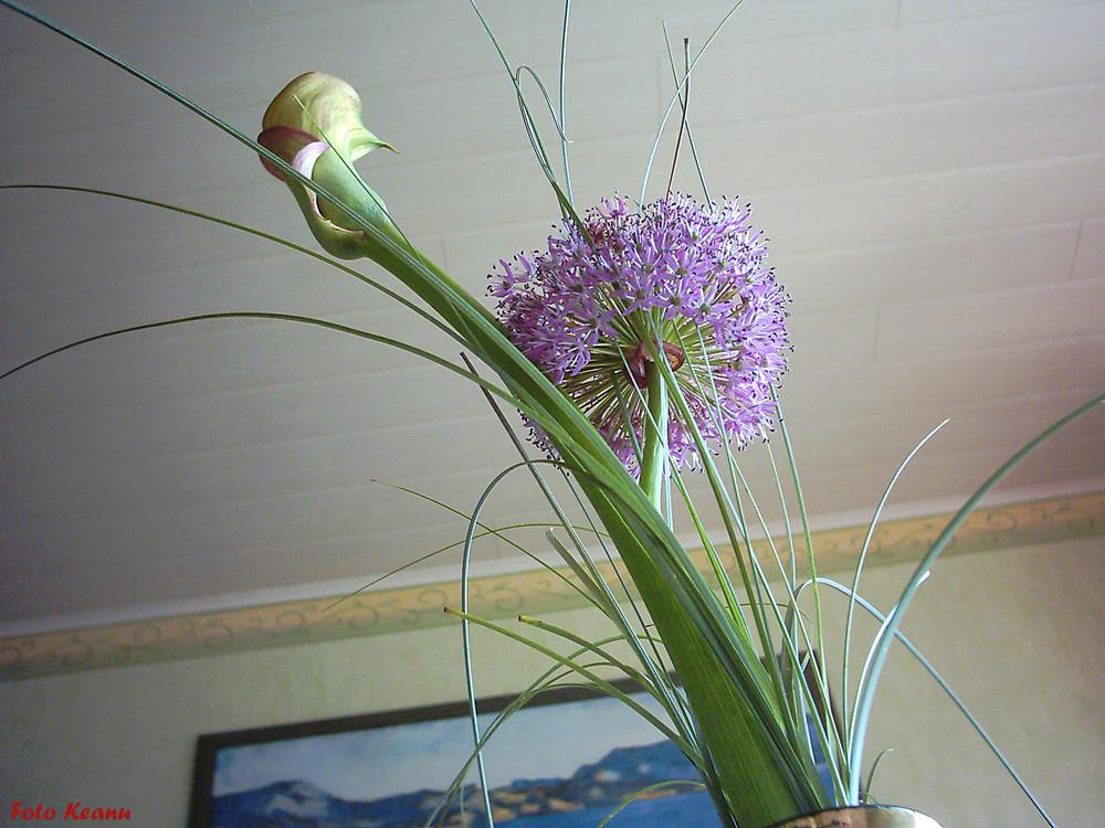 Die schönste lila Blume..!!!!!  FOTO KEANU  !!!!!!!