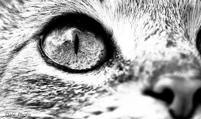 Die schönsten Augen..