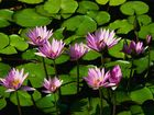 Die schönsten Blumen der Welt