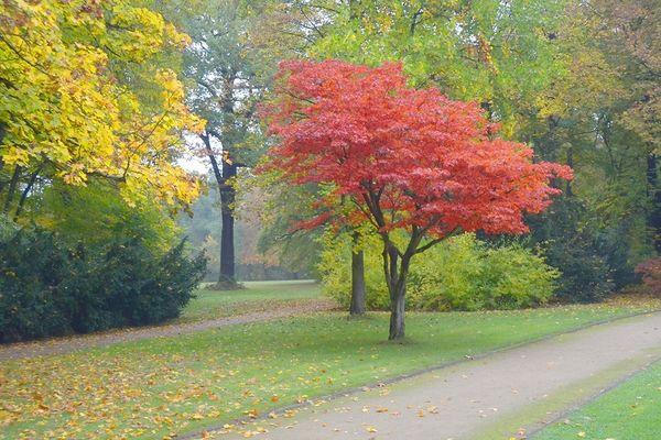 ......die schönsten Farben bringt uns der Herbst