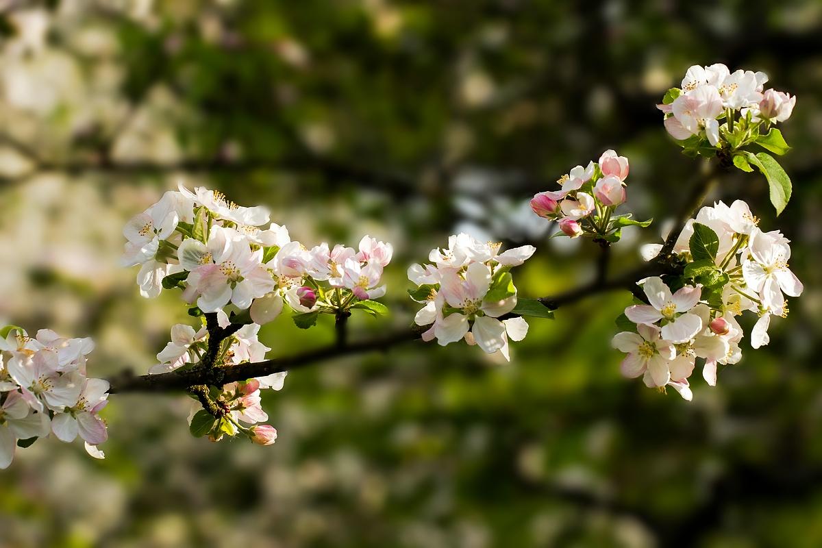 Die schönsten Freuden des Frühlings