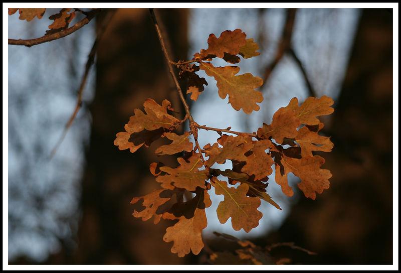 Die schönsten Herbstfarben