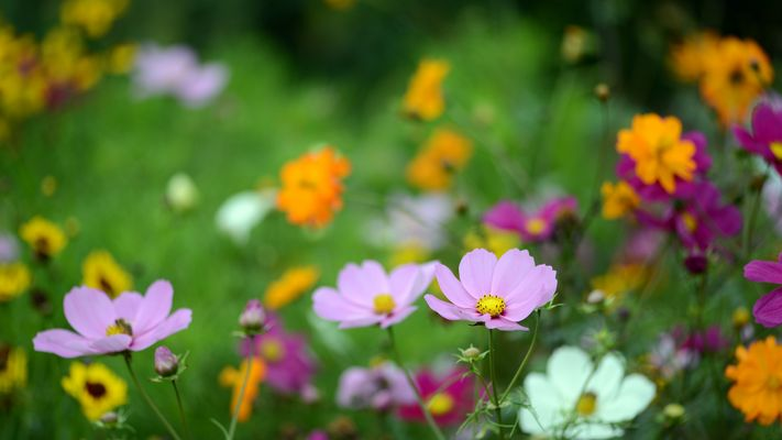 Die schönsten Sommerblumen ...