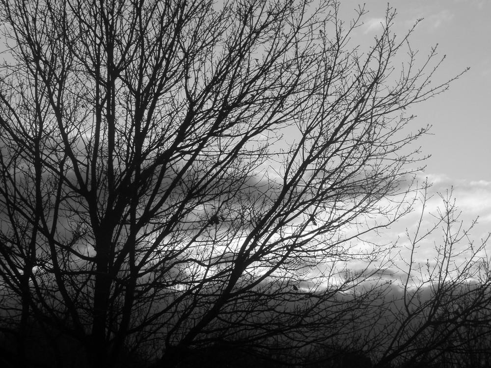Die schwarze Himmel