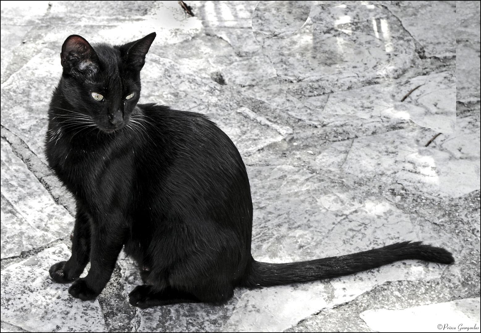 Die schwarze Katze!