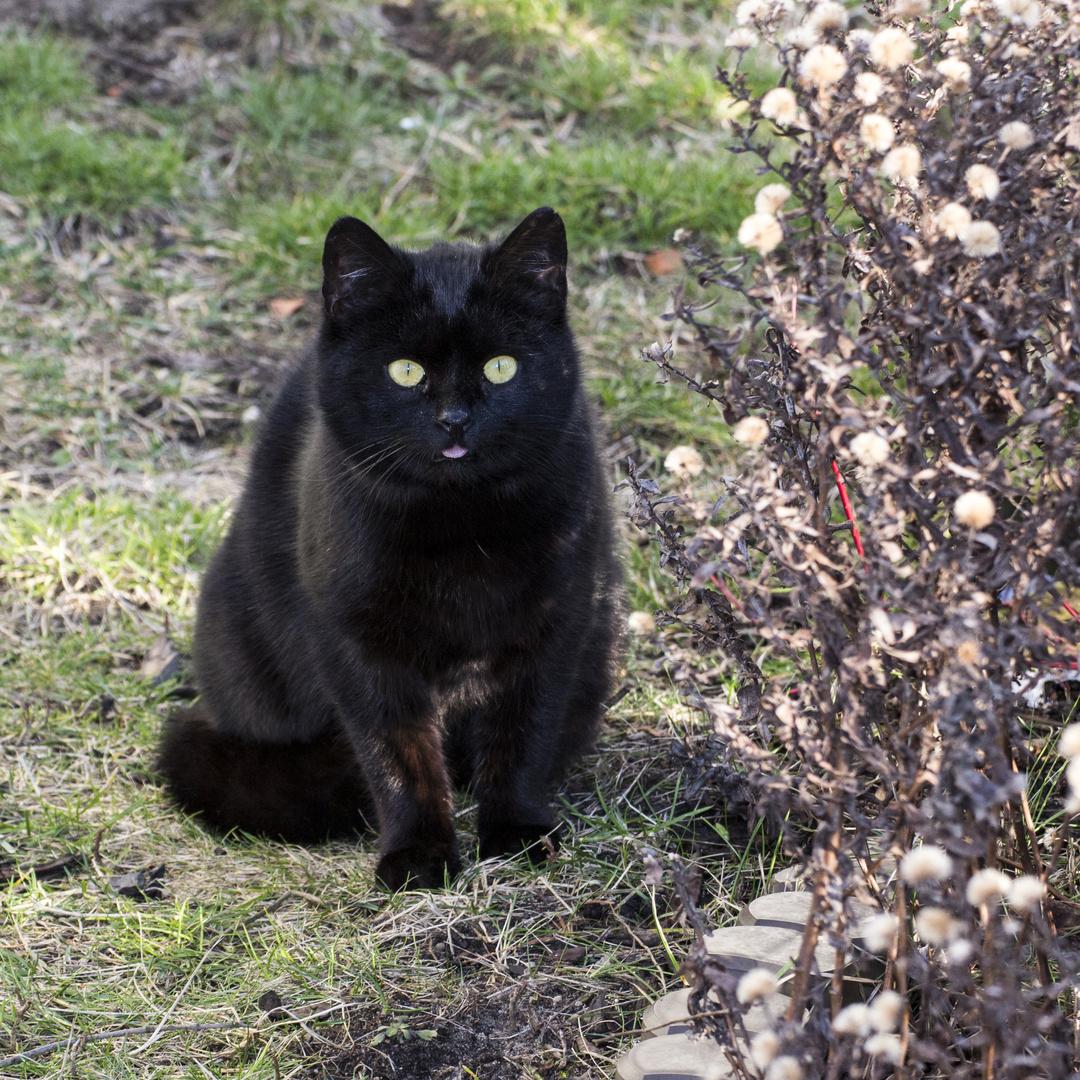 Die Schwarze Katze ist erstaunt