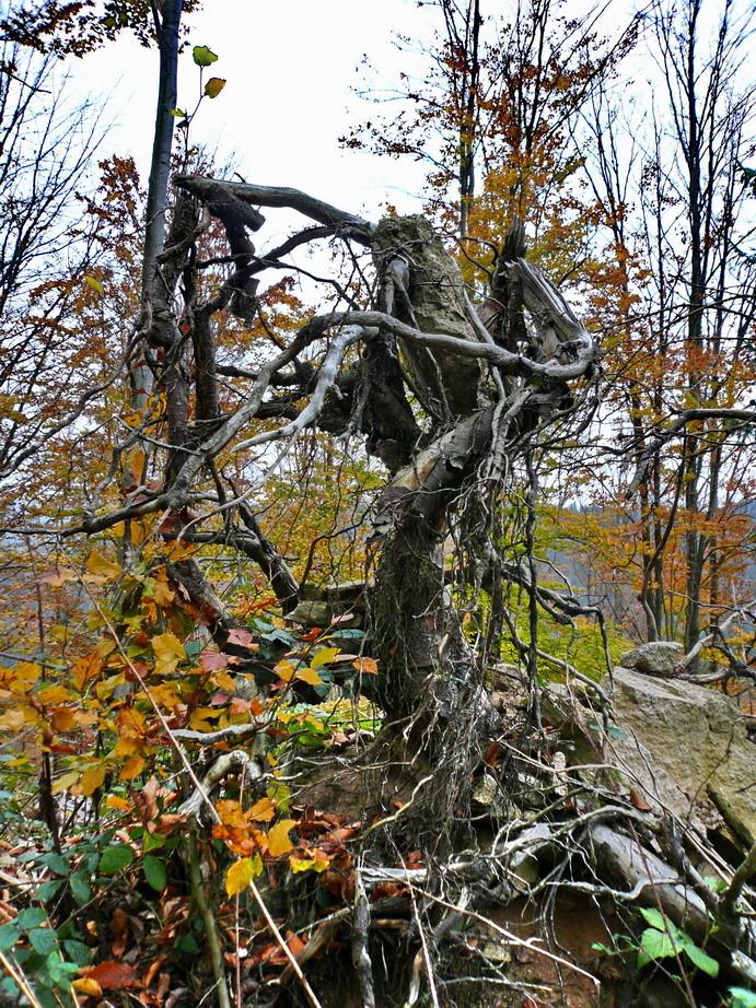 Die Schwarzwaldserie 1