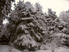Die Schwere des Schnees