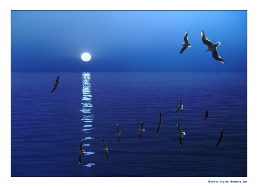 ... die See des Lebens