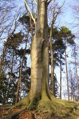 Die Seele(n) des Baums