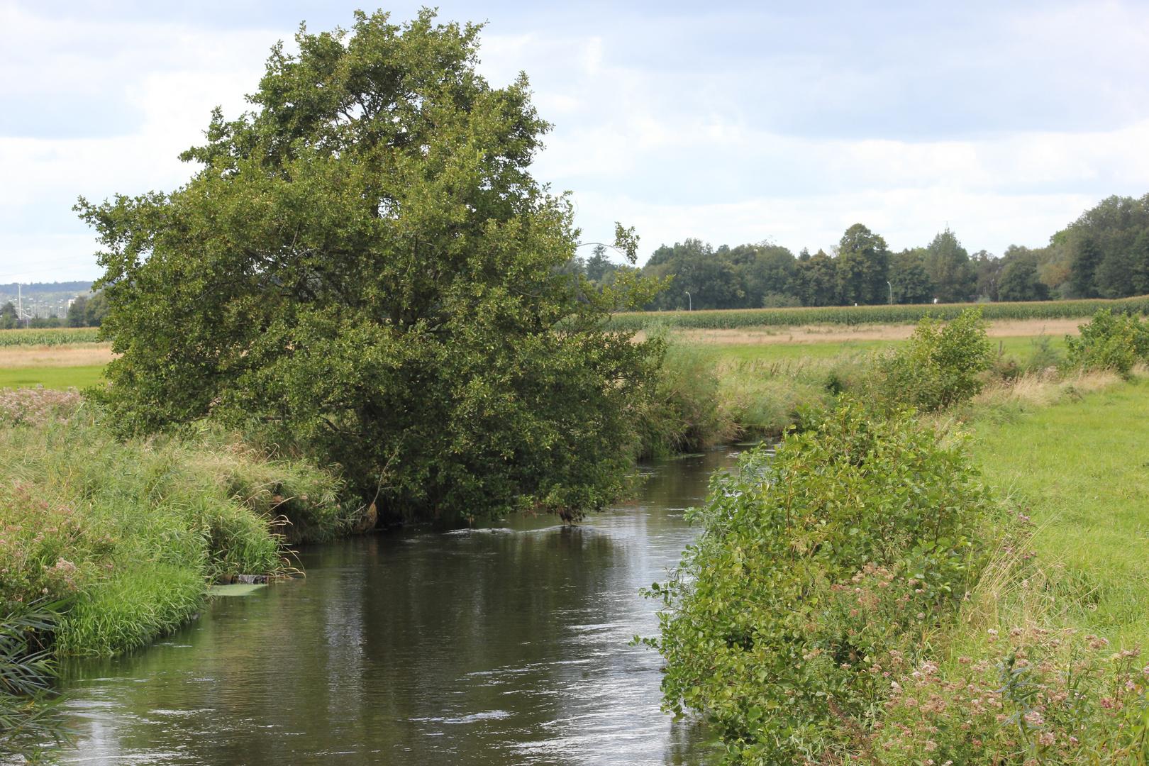 Die Seeve am Junkerssee in Hörsten