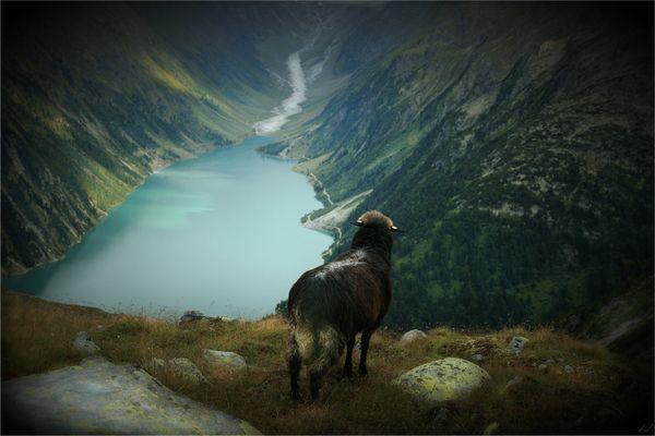 Die Sehnsucht des schwarzen Schafes